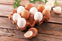 احتمال افزایش مجدد قیمت تخممرغ  در روزهای آتی/ قیمت هر شانه تخم مرغ از 12 هزار و 600 به 14 هزار تومان افزایش یافت