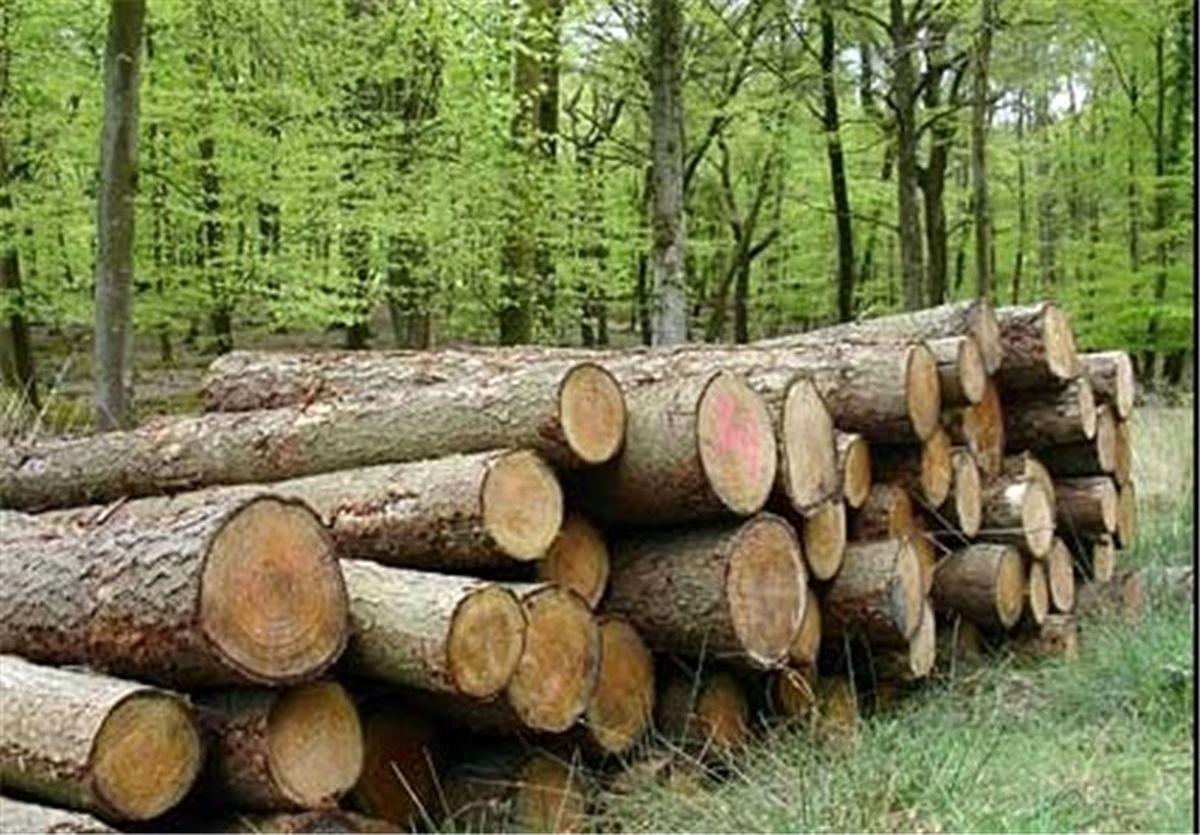 40 درصد طرح توسعه زراعت چوب در استان محقق شد