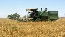 پایداری کشت گندم در خطر است / دولت گندم را هم به بازار دلالی اضافه کرد!