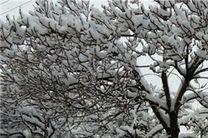 بارش برف مناطق جنوبی مازندران را سفیدپوش کرد
