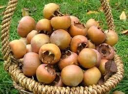 مردم روستای سرخ ولیک چهاردانگه ساری میوه های جنگلی را فرآوری می کنند