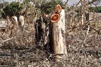 ادارات و مدارس حق قطع درختان را ندارند/احیای درختان بومی