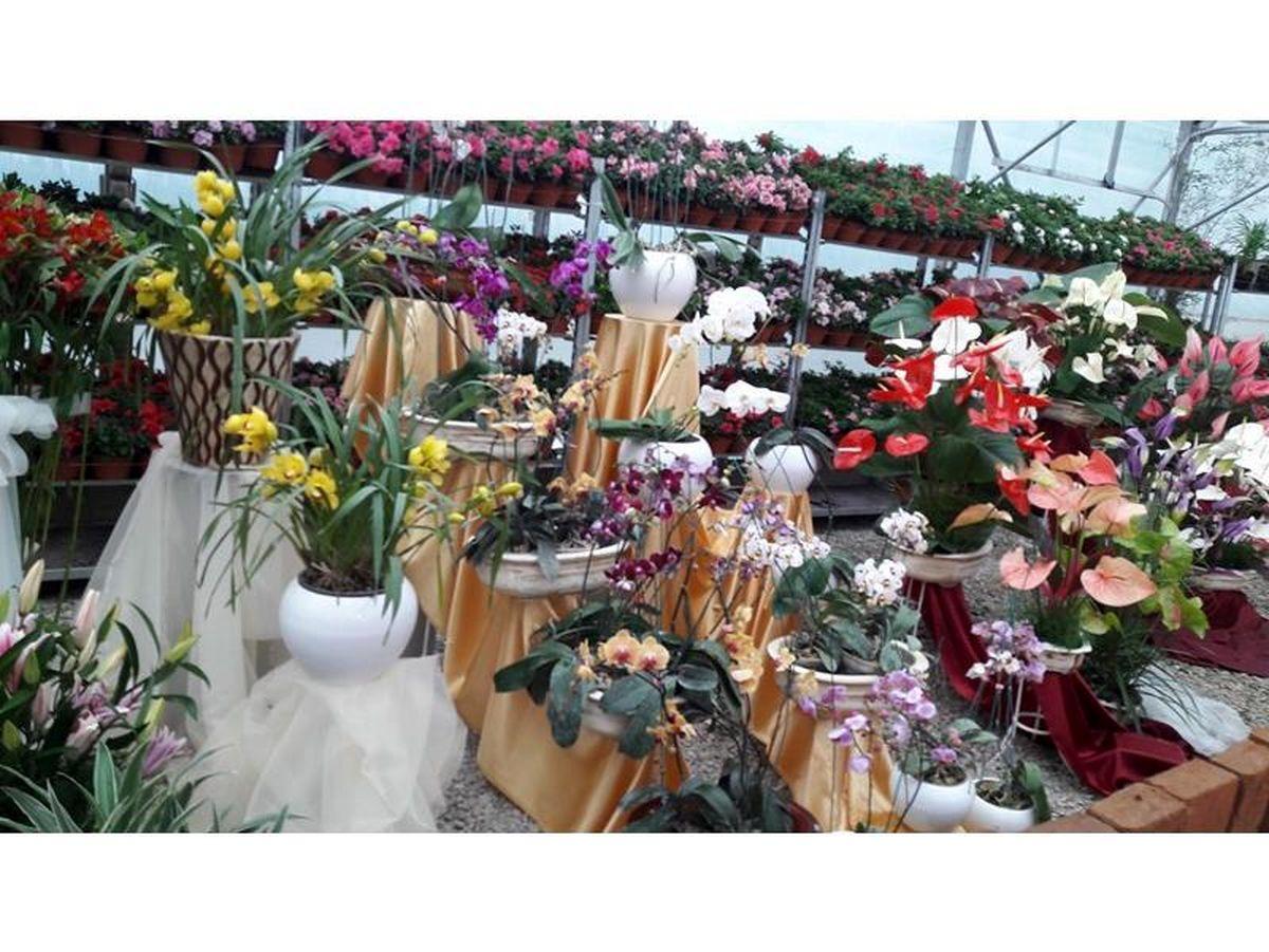 صادرات 126 هزار گلدان گل از نوشهر به خارج از کشور