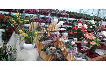 10 هزار گلدان گل از نوشهر به خارج از کشور صادر شد