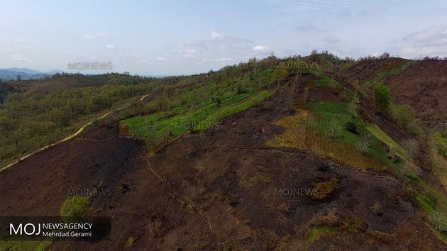 ضریب حفاظتی جنگل های کشور تا پایان برنامه ششم توسعه 100درصدی می شود