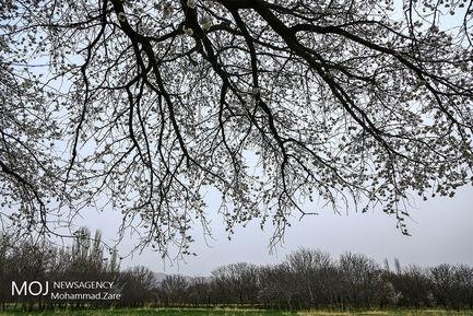 طبیعت بهاری ساوه