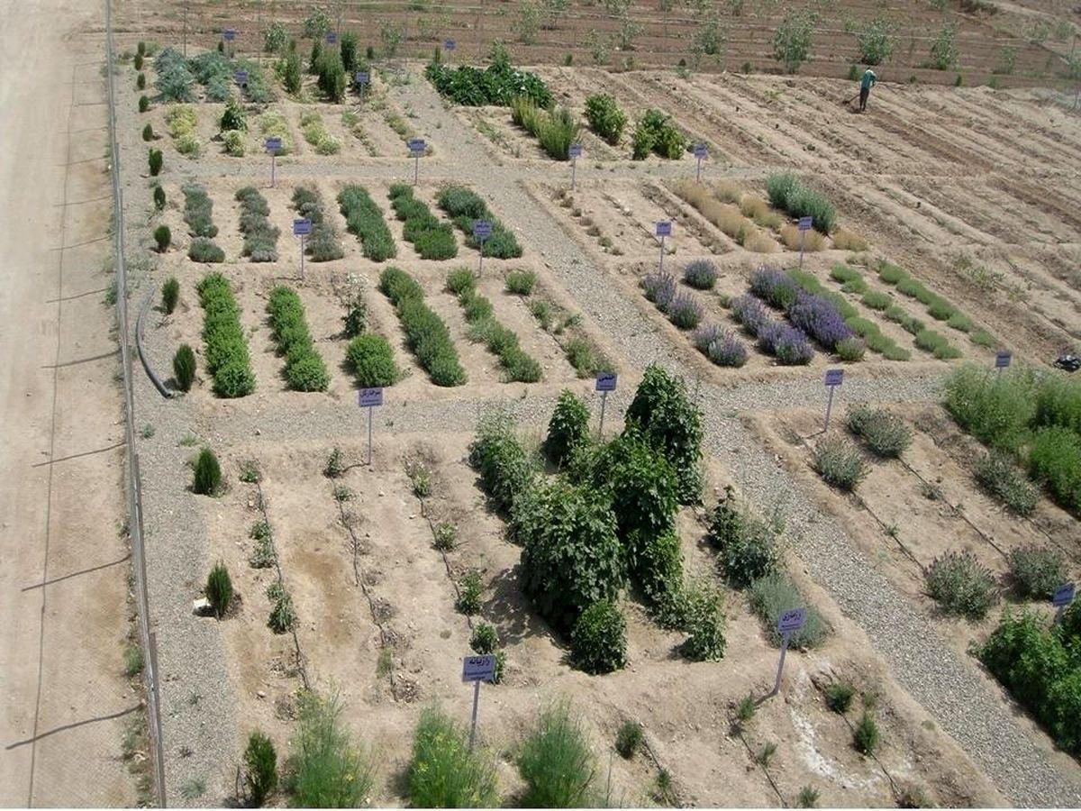 توسعه باغ گیاهان دارویی علوی