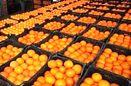 توزیع میوه شب عید از 23 اسفند آغاز می شود