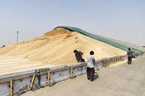 پرداخت 50 درصد وجوه کشاورزان خوزستانی که به سیلو گندم تحویل دادند
