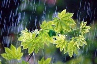 ضرورت مدیریت مصرف آب با توجه به کاهش بارشهای بهاری