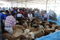 7 جایگاه بهداشتی عرضه دام  برای عید قربان