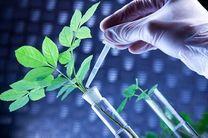 """تنظیم """"سند ملی گیاهان دارویی"""" برای کشور یک ارزش است"""