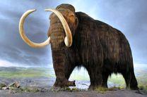 تغییرات اقلیمی کره زمین موجب انقراض ماموت ها شده است