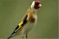 کشف 43 پرنده وحشی قاچاق در اصفهان