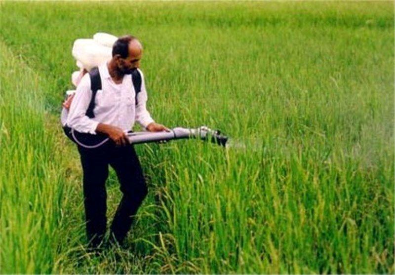 ۵ درصد سموم مصرفی در کشاورزی کم خطر هستند