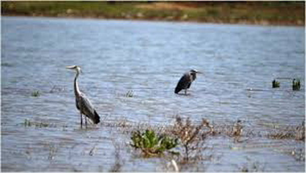 تالاب «گیلارلو» گرمی شکار ممنوع شد