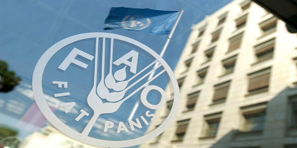 هشدار سازمان فائو برای تهدیدهای امنیت غذایی در بحران کرونا