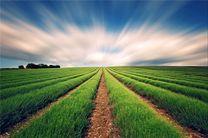 توصیههای پنجروزه هواشناسی به کشاورزان