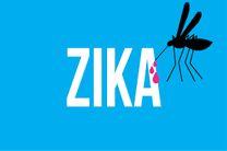 یک میلیون و ۶۰۰ هزار زن باردار مبتلا به ویروس زیکا هستند