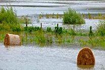 کشاورزی فرانسه چهار میلیارد یورو خسارت دیده است
