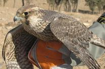 رهاسازی پرنده دلیجه در زیستگاه های طبیعی سمیرم