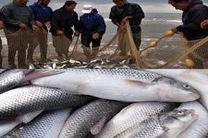 دامهای سیاه در کمین ماهیان سفید گیلان
