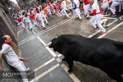 جشنواره گاوبازی«سان فرمین» در اسپانیا