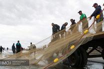 صید 1650 تن ماهی از دریای مازندران