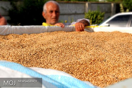 ۱۲۰ میلیارد ریال از مطالبات گندمکاران مازندران پرداخت شد