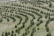توسعه پارک جنگلی سراب قنبر نیازمند نگاه ویژه مسوولان و مردم است