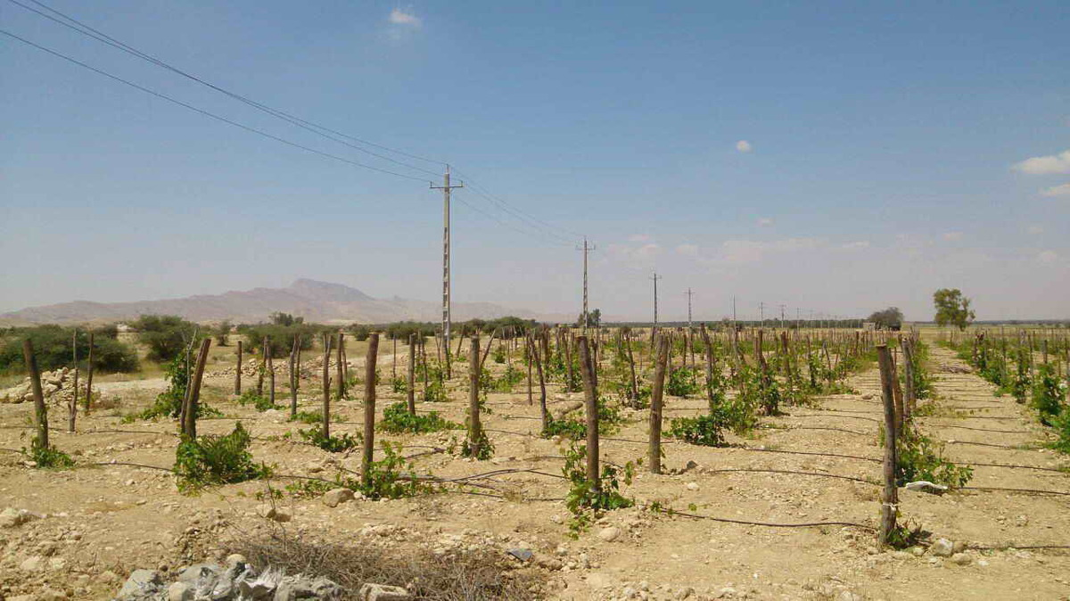 افزایش خسارت در صنعت کشاورزی با قطع بدون برنامه برق
