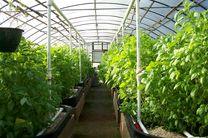 ۲۲۴۰ هکتار گلخانه جدید امسال در کشور احداث می شود