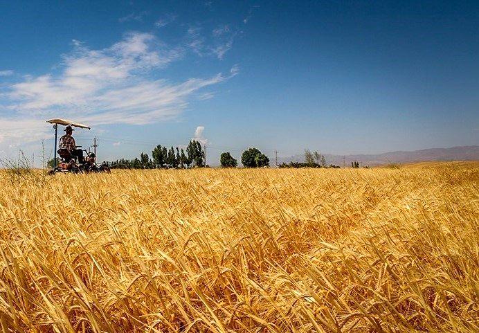 بخش کشاورزی باید یک تنه پاسخگوی بخش امنیت غذایی جامعه باشد