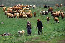 ویزیت رایگان عشایر در مناطق ییلاقی اردبیل