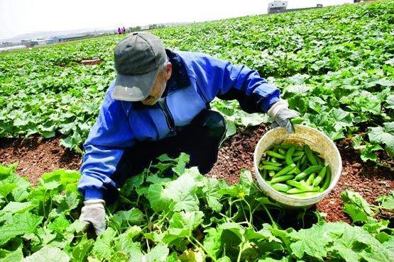 افزایش تولید محصولات ویژه کشاورزی در اصفهان
