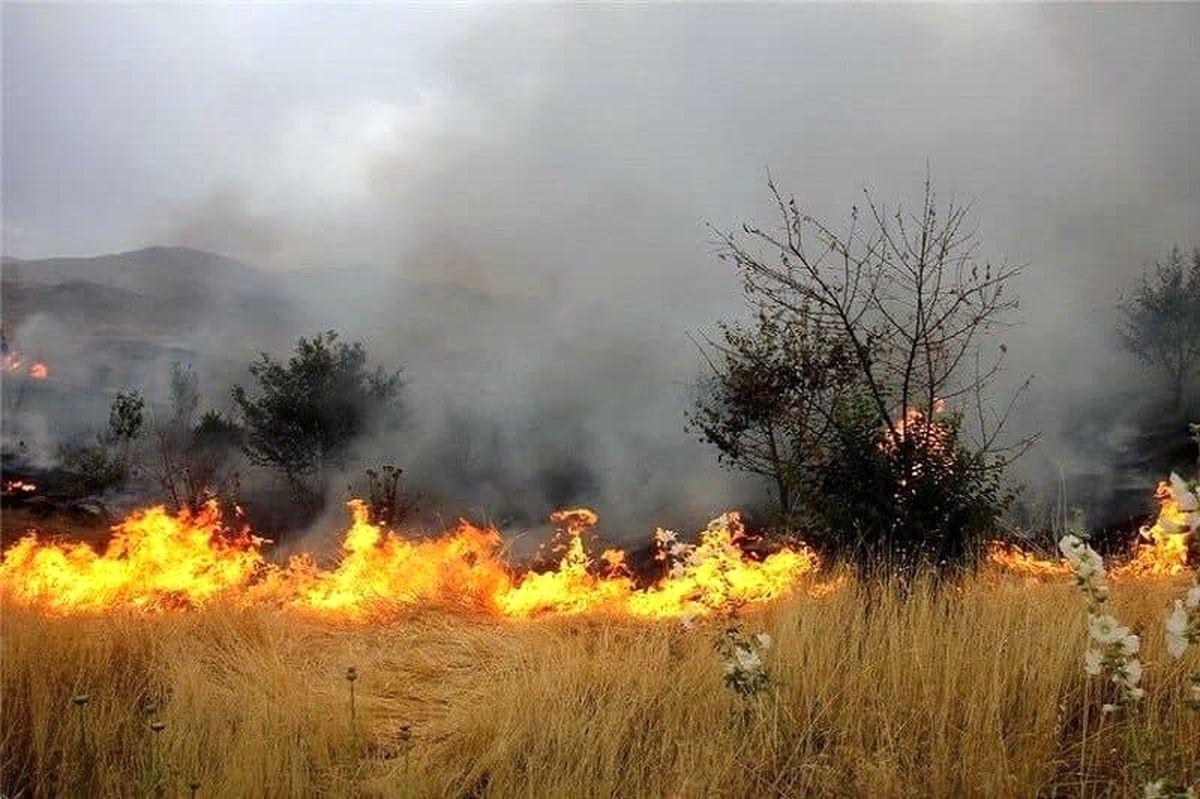 رییس سازمان جنگلها خواستار برخورد قاطع با آتشافروزان شد