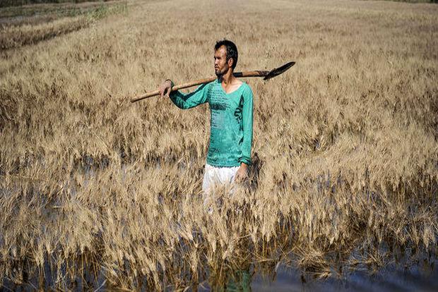 کشاورزان خراسان رضوی خسارت دیدند