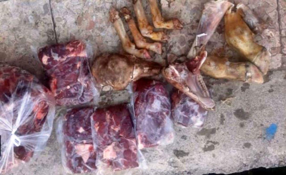 لاشه 3 راس مرال، کَل وحشی و شوکا کشف و ضبط شد