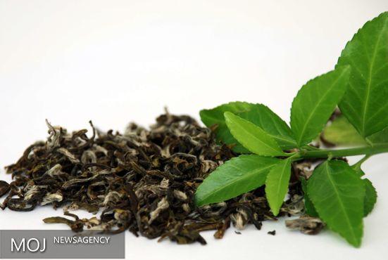 خارجیها قدر چای ایرانی را بیشتر میدانند